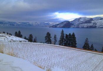 Wine winter